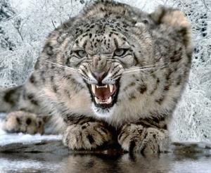 snow-leopard_sm