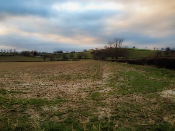 View across the grain field